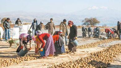 Photo of EMEK   Patatese Gelen İhracat Yasağı Tüccarın Ekmeğine Yağ Sürmektir!